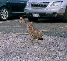 Yard Cats by Faryl Loew