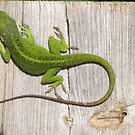 Tropical Anolis Lizards -  TN Habitat  by JeffeeArt4u