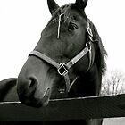 Equine Beauty by Bobbie J. Bonebrake