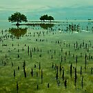 Ocean Mangroves - Moreton Island - Queensland by AMP  Al Melville Photography