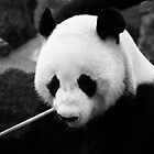 Wang Wang the panda, close up by Elana Bailey