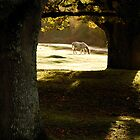 New Forest Pony by Miffy