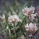 ~ Strawberry Clover all Over ~ by Lynda Heins