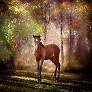 Foal in the woods by Nicky Stewart