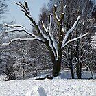 Snow-scape in Hilly Fields Park, Lewisham by John Gaffen