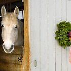 Vermont Christmas by Ellen McKnight
