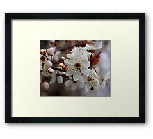 odd 8 petal cherry blossom Framed Print