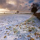 First Snow by Andrew Leighton