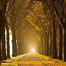 Golden Lane by LarsvandeGoor