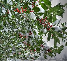 Snow Berries by Kim Slater
