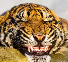 Say cheeeeeeeeeeeeeeeeeeese!!! by BigCatPhotos