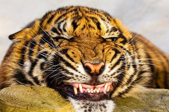 Say cheeeeeeeeeeeeeeeeeeese!!! by BigCatPhotos