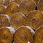 Frosted wheats by David Isaacson