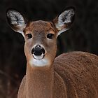 Inquisitive by Bill McMullen