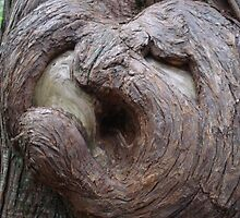 Heart burl in Glacier National Park by MontanaMel