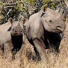 Black Rhino mother and baby (2) by Margaret  Hyde