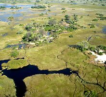 Aerial of Okavango Delta, Botswana (12) by Margaret  Hyde