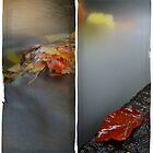 Autumn Water by rosiephoto