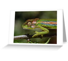 Gaudy camouflage........ Greeting Card