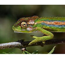 Gaudy camouflage........ Photographic Print