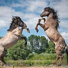 I'll show you how to horse box! by Henri Ton