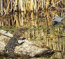 Young Gator by venny