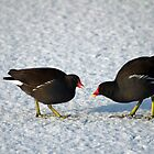 Moorhens on the Ice and Snow by Rod Johnson