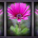 Triple Bloom  by Rozalia Toth