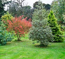 Leith Hall Gardens 2 (Huntly, Aberdeenshire, Scotland) by Yannik Hay