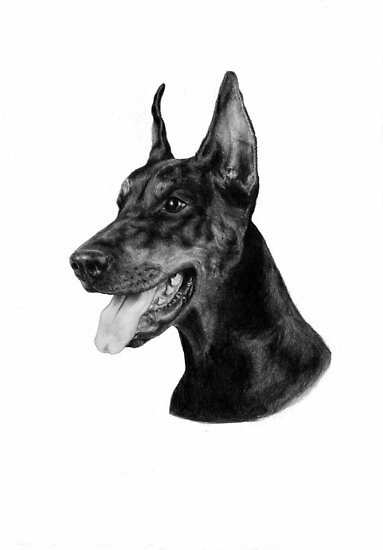 Dobermann by Danguole Serstinskaja