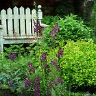 Garden Bench & Verbascum by enchantedImages