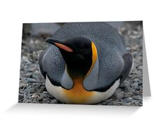 Resting up Greeting Card