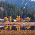 Fall color reflections by Steve Biederman
