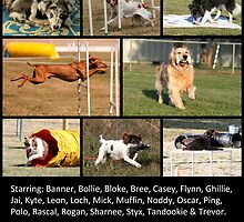 ACT Sports Dogs In Action! by fhrp