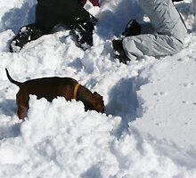 THE AVALANCHE-RESCUE-DACHSHUND by Heidi Mooney-Hill
