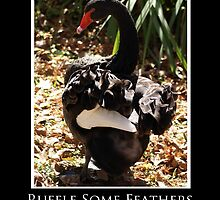 ZooTips: Ruffle Some Feathers by Angie Dixon