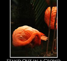 ZooTips: Stand Out in a Crowd by Angie Dixon