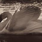 Morning swim 2 by Trevor Murphy