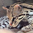 Ocelot by SuddenJim