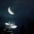 Moonlight Swim by Diane Schuster