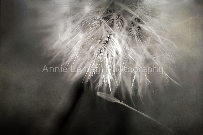 Separation of Love by Annie Lemay  Photography