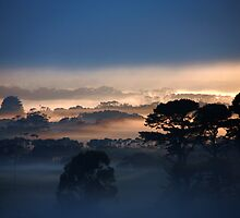 Misty enhanced by Eunice Atkins
