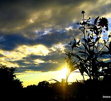 Sunset Silhouette by Debbie Robbins