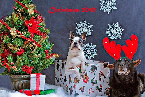 Merry Christmas by David Stegmeir