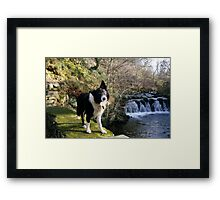 Indy at Nant-Y-Coed Framed Print