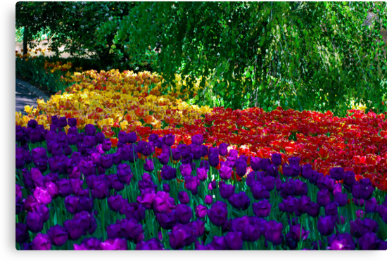 Color Explosion at the Cincinnati Zoo by Tom Aguero