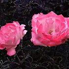 A rose in the gloom by Shaun Swanepoel