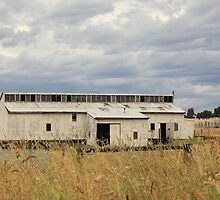 Shearing Shed by Robert Jenner