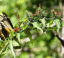 Iguazu Wildlife by Russell Shearing