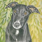 Harvey the Greyhound by FranEvans